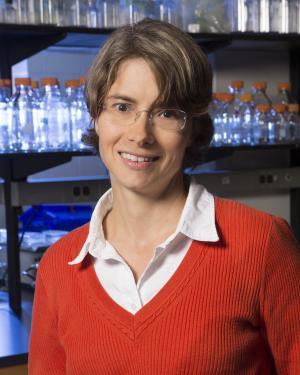 Anne Morel-Kraepiel